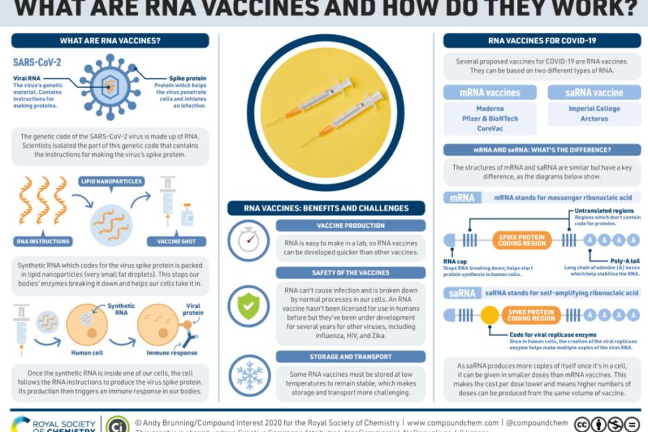 Infografika wyjaśniająca, jak działa szczepionka na bazie RNA przeciw SARS-CoV-2.