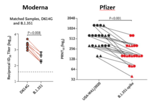 Wykres pokazujący mniejszą skuteczność szczepionek Moderny i Pfizera na wariant południowoafrykański wirusa SARS-CoV-2
