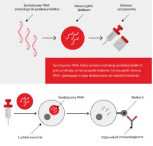 Obrazek pokazujący schemat działania szczepionki przeciw COVID-19