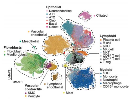 Fragment molekularnego atlasu tkanek pacjentów z Covid-19.